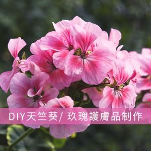 DIY天竺葵/ 玖瑰護膚品制作